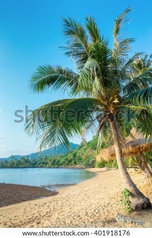 Coconut palm on a tropical sandy beach - stock photo