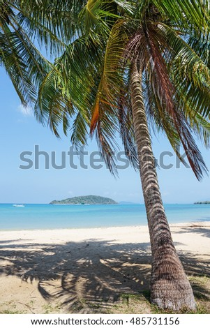 Coconut palm on a tropical sandy beach