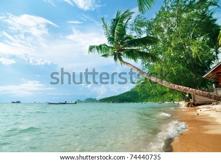 Coconut palm on the tropical beach - stock photo