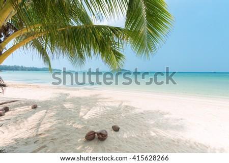 Coconut palm tree at the beautiful beach - stock photo