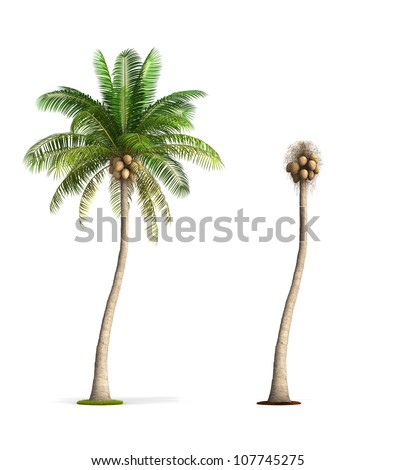 how to draw coconut tree