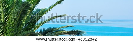 Coconut palm tree leaves with blue sky and turquoise sea