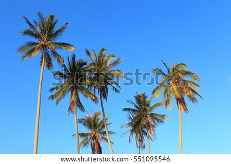 Coconut palm tree on blue sky background