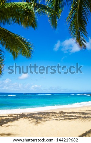 Coconut Palm tree on the sandy beach in Hawaii, Kauai