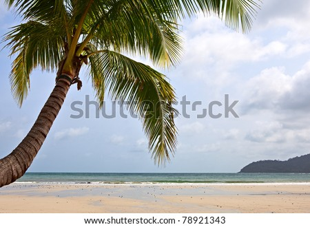 Coconut palm tree over the sand near the sea