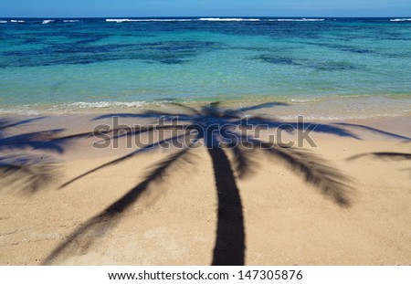 Coconut palm tree shade on a sandy beach with clear waters of a lagoon in background - stock photo