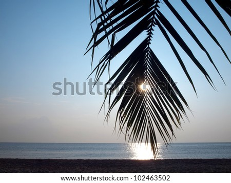 Coconut palm tree silhouette against the sun and tropical beach - stock photo