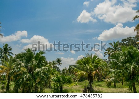 Coconut palm tree with blue sky