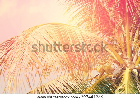 Coconut palm tree with Retro Filtered, as Background for Travel Holiday Cards - stock photo