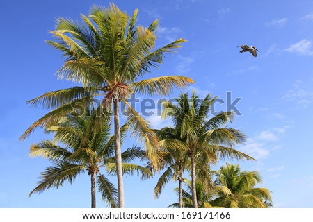 Coconut Palm Trees Against a Beautiful Blue Tropical Sky - stock photo