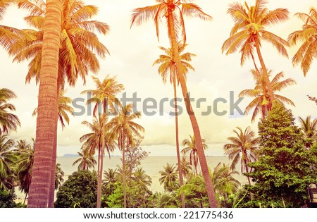 Coconut palm trees against blue sky - stock photo