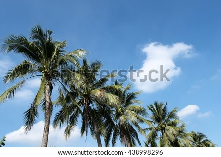 Coconut palm trees against blue sky / Coconut palm trees  - stock photo