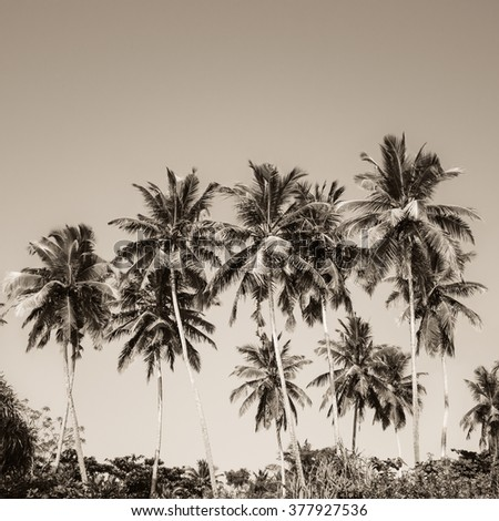 Coconut palm trees and mangrove in tropics as a background. Sepia effect - stock photo