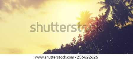 Coconut palm trees at sunset. Tropical beach background. Instagram effect (vintage).  - stock photo