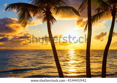 Coconut palm trees on colorful sun set  - stock photo