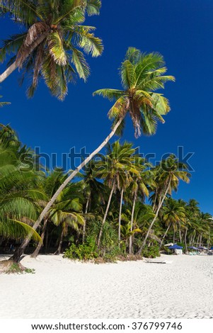 Coconut palm trees on tropical beach, Philippines, Boracay