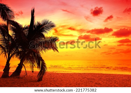 coconut palm trees silhouette at Koh Kood, Thailand - stock photo