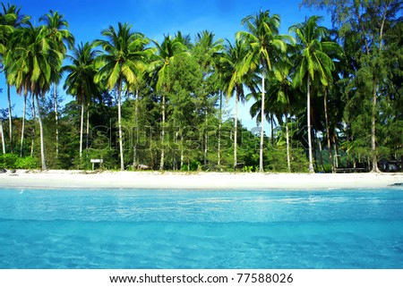 Coconut Palm Trees with Blue Sea - stock photo