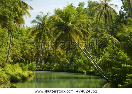 Coconut palms above the river in jungle of  Indonesia