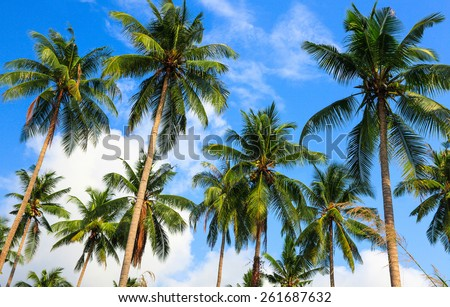 Coconut palms and the sky - stock photo