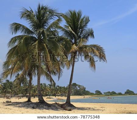 Coconut palms on Caribbean beach - stock photo