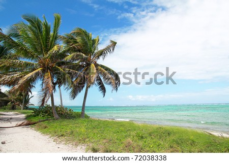 Coconut palms on caribbean sea coastline
