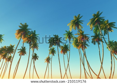 coconut palms on clear blue sky background toned image