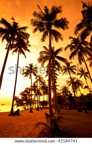 Coconut palms on sand beach in tropic on sunset. Thailand, Koh Chang, Kai Bae beach - stock photo