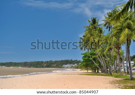 Coconut palms on the beach in Joao Pessoa - Paraiba - Brazil - stock photo
