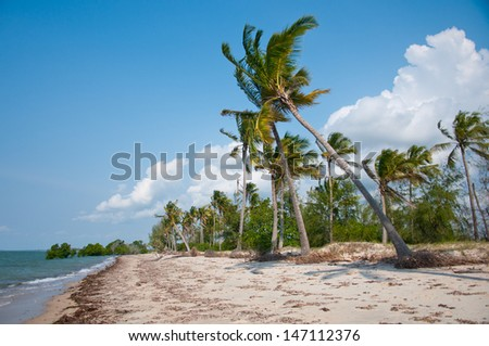 coconut palms on the beach in the indian ocean - saadani national park in tanzania