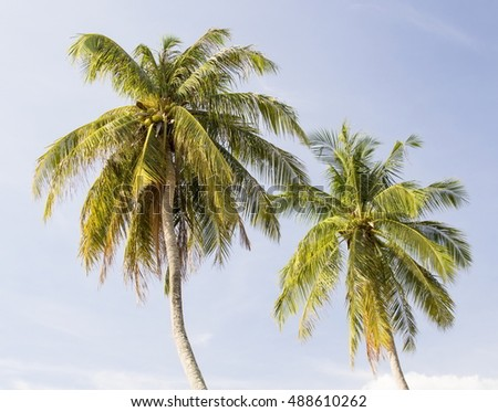 Coconut palms over blue sky