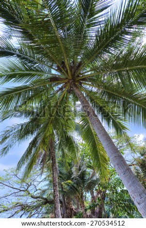 Coconut plam tree in tropical view. Summer vaction.  - stock photo