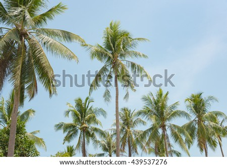 coconut tree and blue sky in the island.