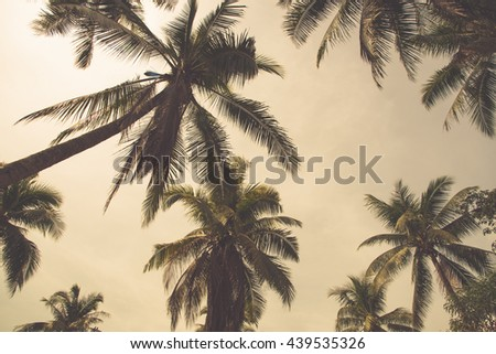 coconut tree and  sky in the island. vintage tone - stock photo