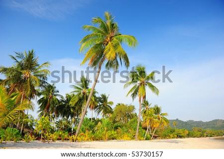 coconut tree at the beach - stock photo