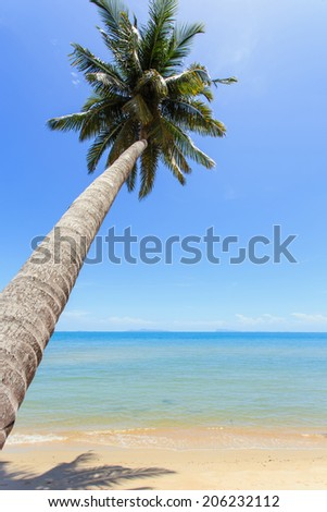 Coconut tree at tropical beach