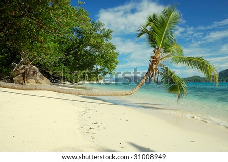 Coconut tree by the beach and sea in Seychelles - stock photo