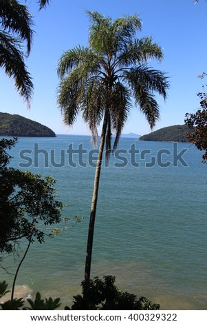 Coconut tree in a beautiful beach in Brazil