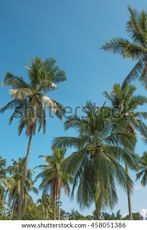 coconut tree in blue sky for background