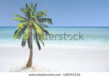 Coconut tree in the tropical sea - stock photo