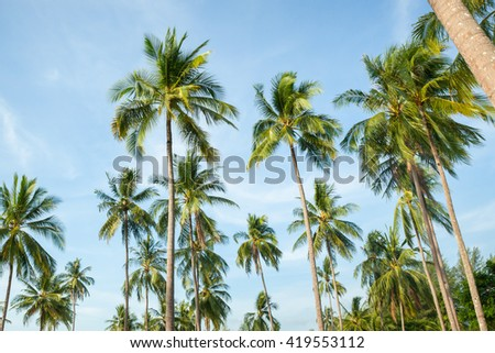 Coconut tree on blue sky in the south of Thailand. - stock photo