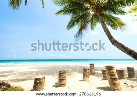 Coconut tree palm at the beach - stock photo