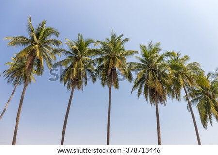 Coconut tree under blue sky background