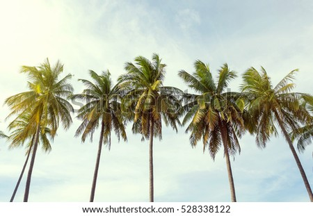Coconut tree with beautiful holiday.