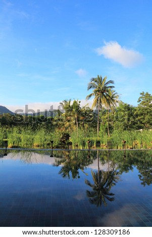 Coconut tree with blue sky and reflection in the pool