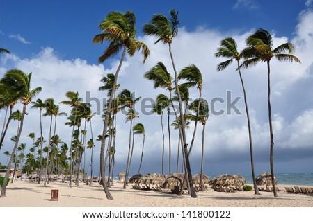 Coconut  trees along the beach - stock photo