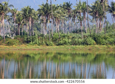 Coconut trees and reflection in southern India state Andhra pradesh - stock photo
