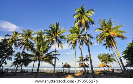Coconut Trees on Beach Resort - Donsol, Sorsogon, Philippines