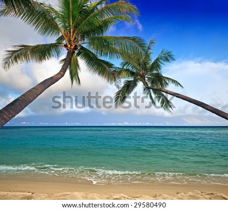 Coconut trees over the sea