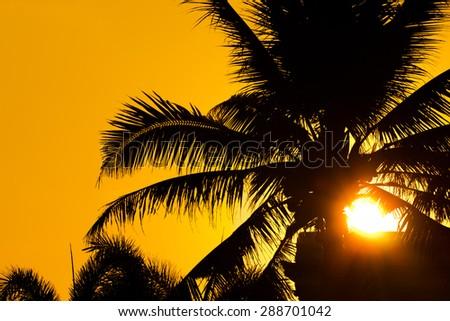 Coconut trees silhouette - stock photo